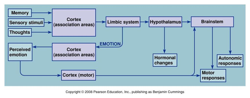 VIII. Integrated CNS Functions: Emotions & Motivation P247 Figure 9.27 The CNS structures.